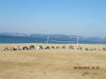 пляж Песчаный 1